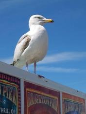 seagull-13464_640 copy